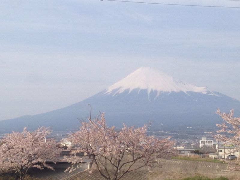 桜と富士_b0213797_16471356.jpg