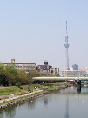 桜から大手毬へ_d0154102_10173035.jpg