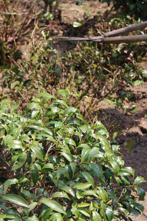 茶LON (11)_b0220318_41995.jpg