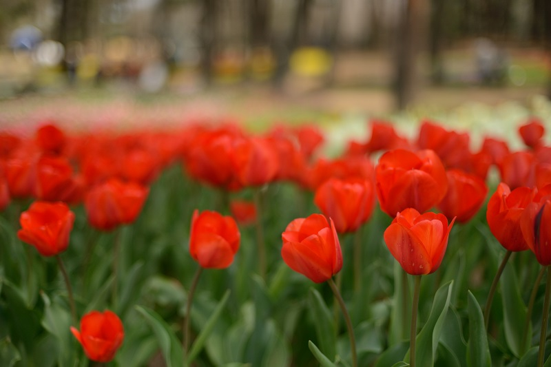 赤い花_b0230131_9224541.jpg