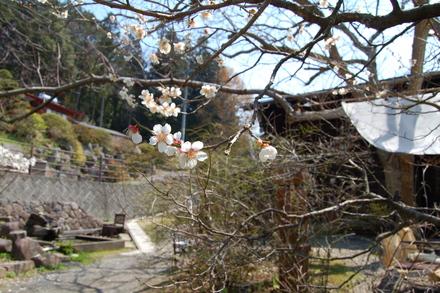 桜が咲き始めました_d0249047_1048639.jpg