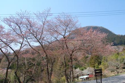 桜が咲き始めました_d0249047_10492445.jpg