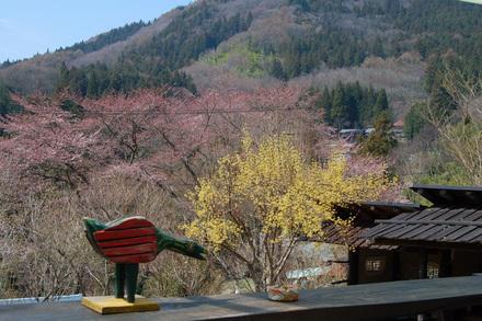 桜が咲き始めました_d0249047_10494224.jpg
