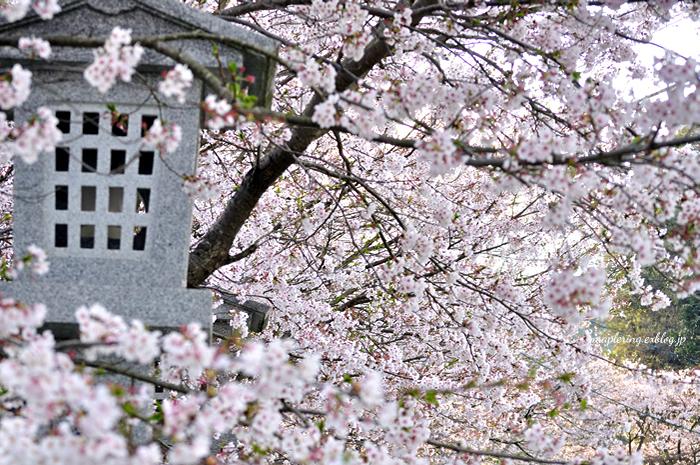 桜2014_f0234062_23145790.jpg
