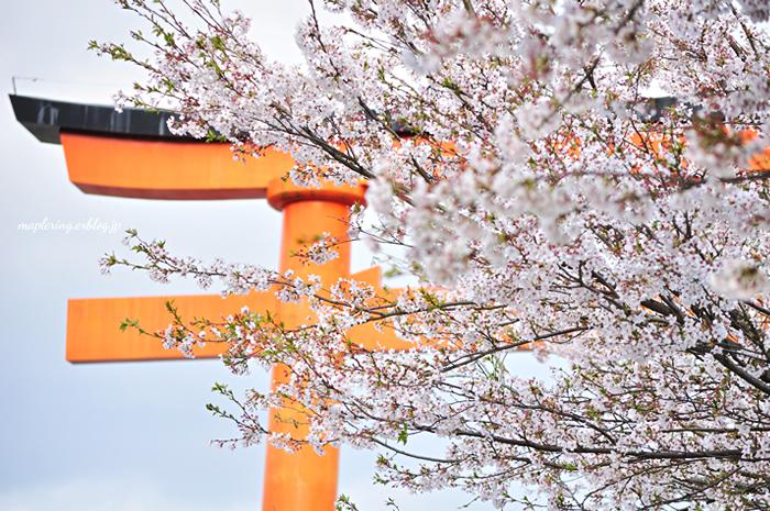 桜2014_f0234062_23145970.jpg