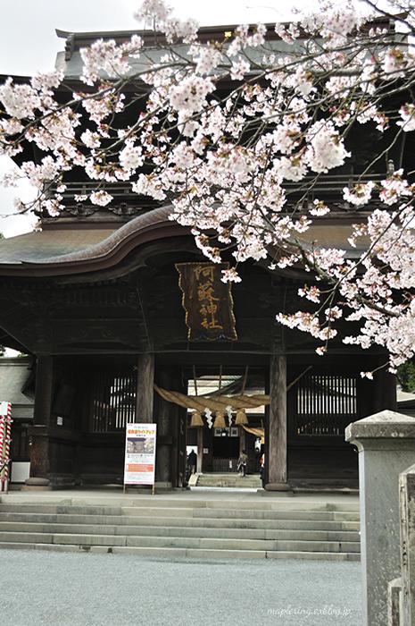 桜2014_f0234062_23145979.jpg