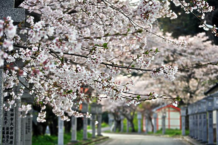 桜2014_f0234062_2315090.jpg