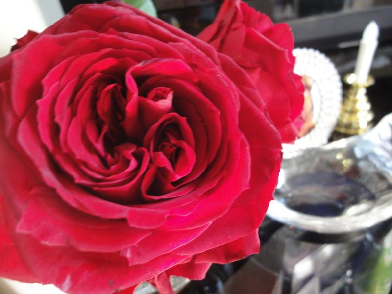 クワトロッソという名の薔薇 : L...