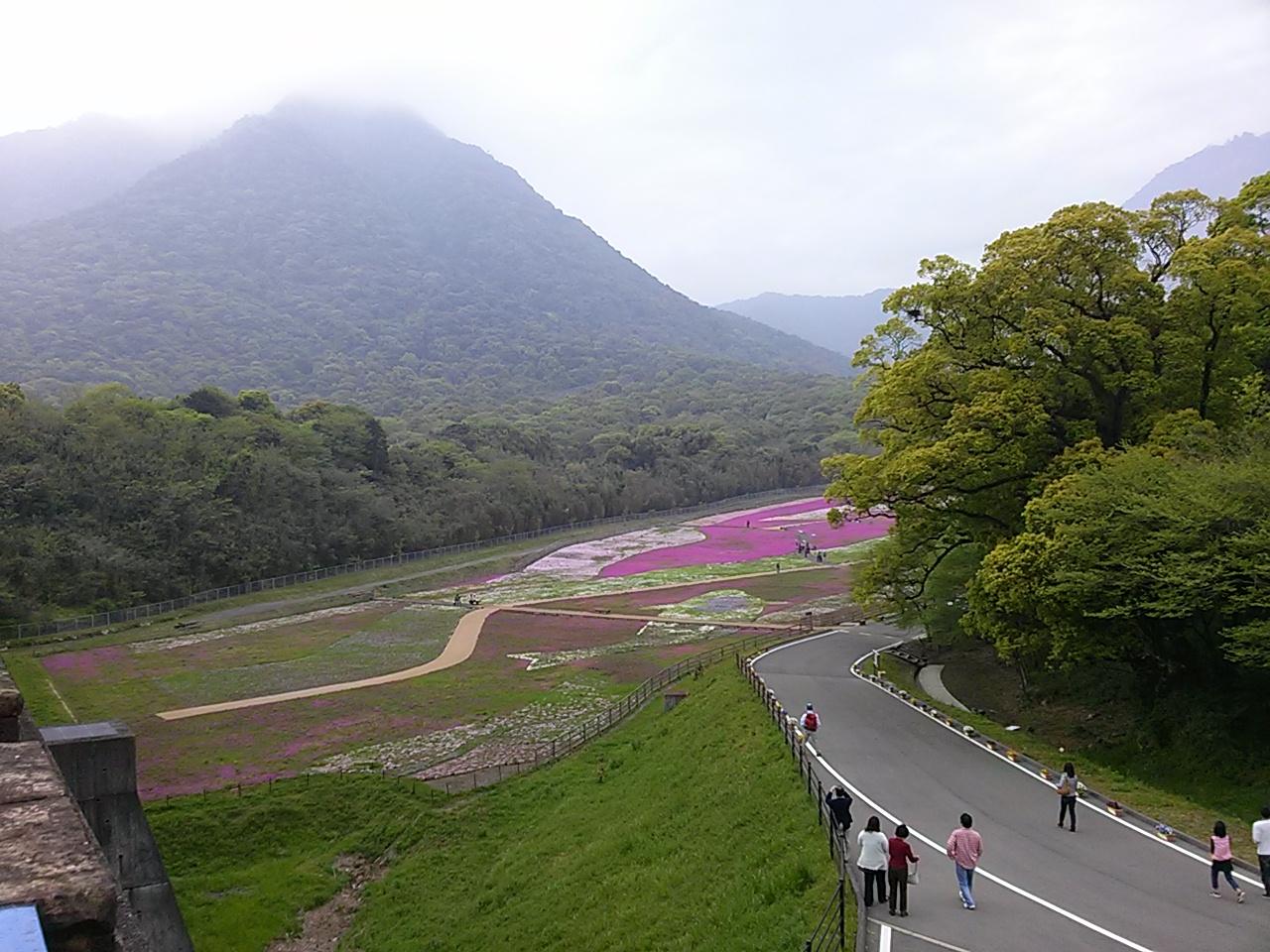 新緑に芝桜色こきまぜて_c0052876_10151284.jpg