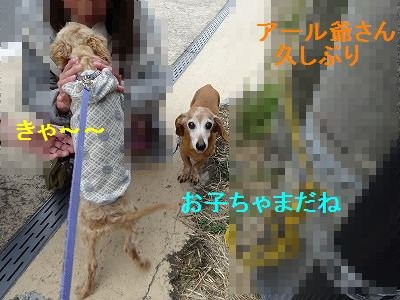 散歩の付き添い介助犬_e0222588_16474327.jpg
