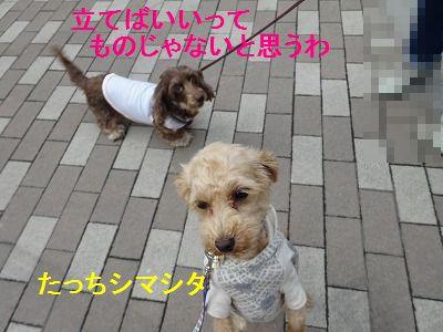 散歩の付き添い介助犬_e0222588_16475078.jpg
