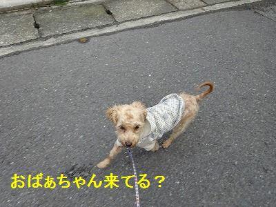 散歩の付き添い介助犬_e0222588_17125889.jpg