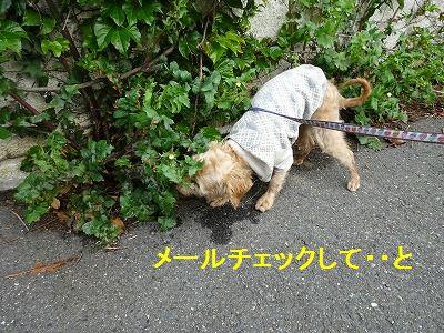 散歩の付き添い介助犬_e0222588_17133097.jpg