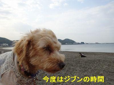 散歩の付き添い介助犬_e0222588_17151068.jpg