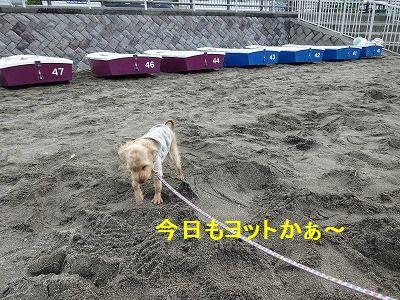 散歩の付き添い介助犬_e0222588_17154008.jpg