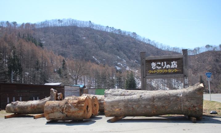 春とケヤキ_f0227395_15271051.jpg