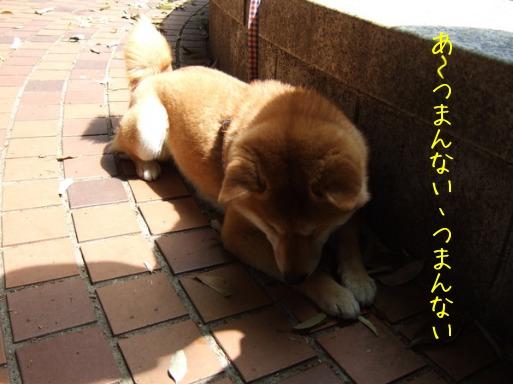 b0320098_22331238.jpg