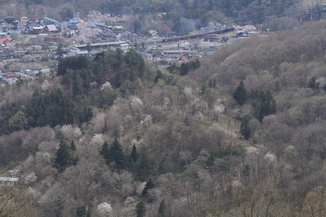 桜咲く山の向こうに見えた鉄橋 - 2014年桜・秩父 -  _b0190710_22581618.jpg