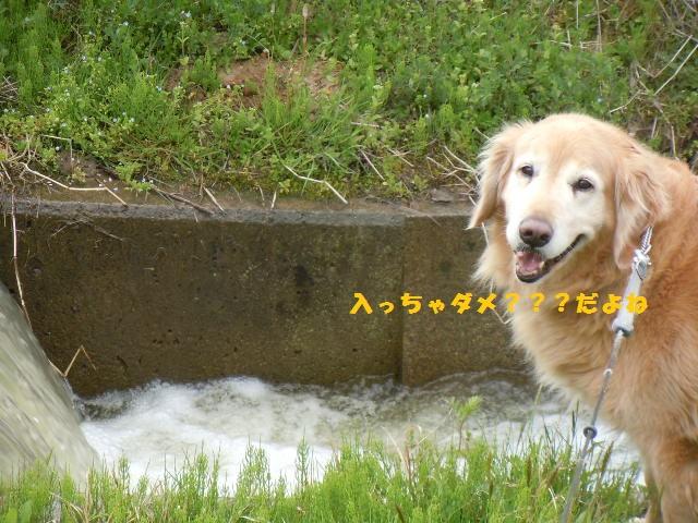 f0114128_1038883.jpg