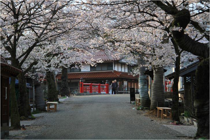 がいせん桜_a0256349_1342973.jpg