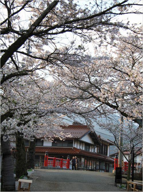 がいせん桜_a0256349_1343996.jpg