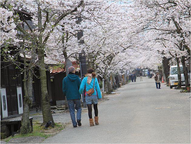 がいせん桜_a0256349_135201.jpg