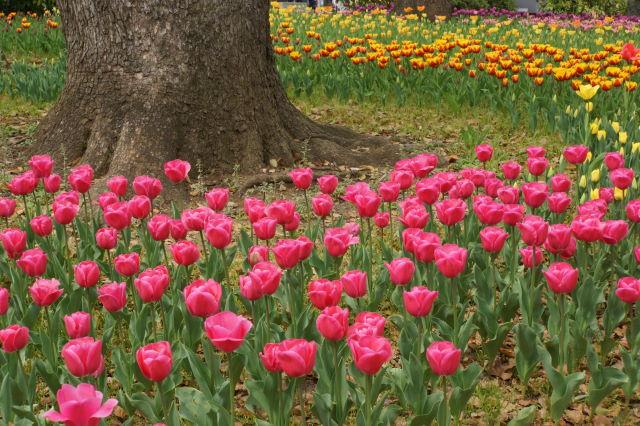 色彩豊かな公園_a0257652_17232180.jpg