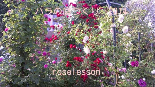 2014  rose lesson_b0089559_11275949.jpg