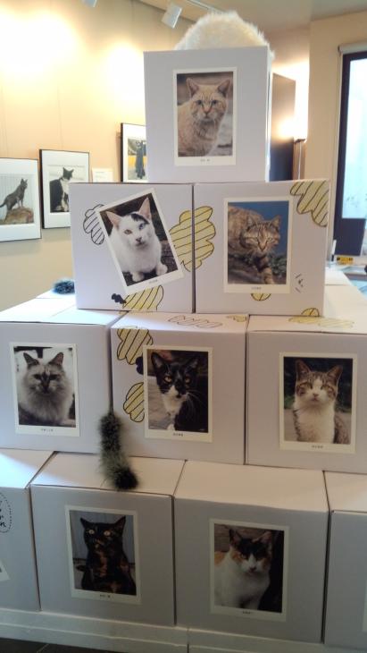 猫・猫・猫_f0326160_11445798.jpg