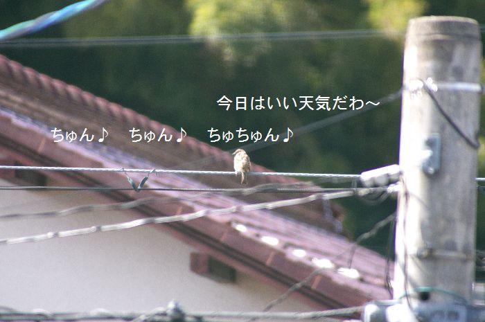 f0197682_1955749.jpg