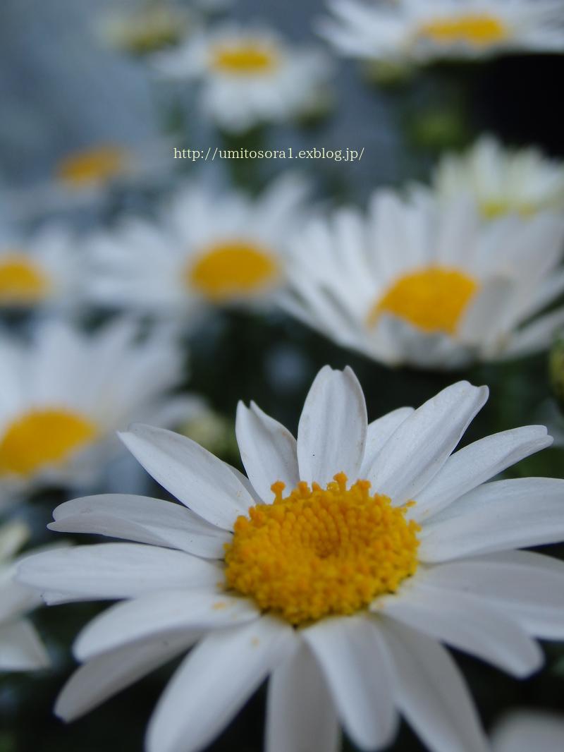 チューリップが咲きました♪_b0324291_19105625.jpg