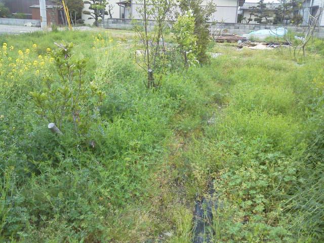 畑の草ひき_e0064493_16253928.jpg