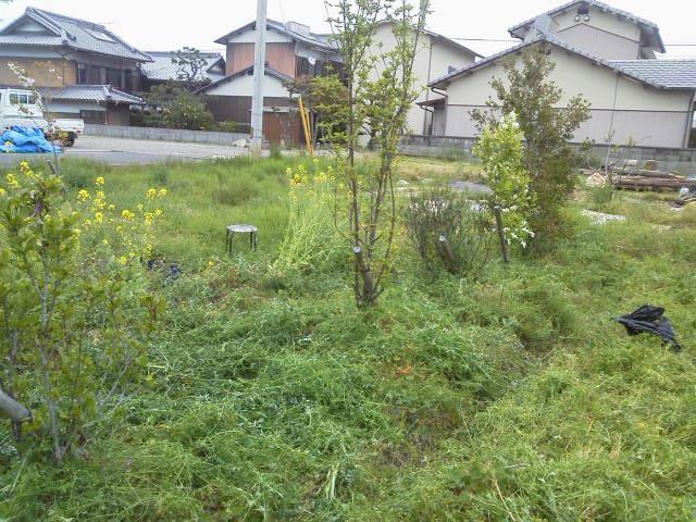 畑の草ひき_e0064493_16254921.jpg
