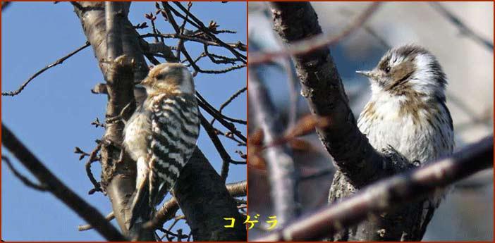 野鳥 2_d0162994_993913.jpg