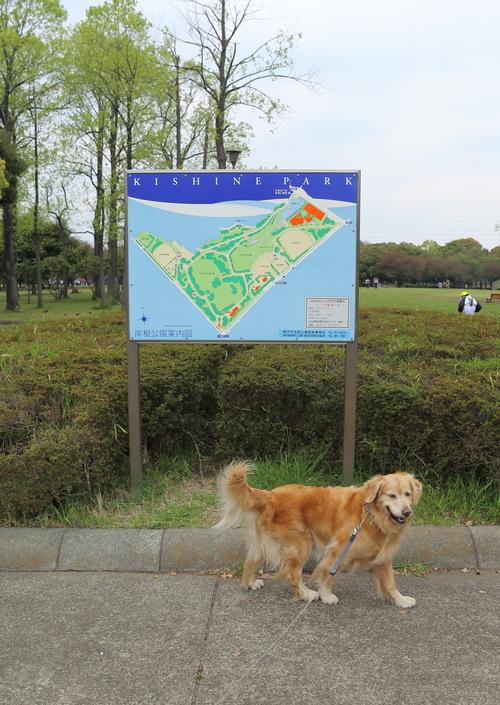 ハーブの苗と岸根公園_b0275998_23174494.jpg