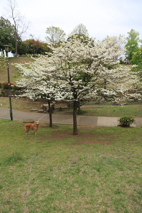 ハーブの苗と岸根公園_b0275998_2327429.jpg