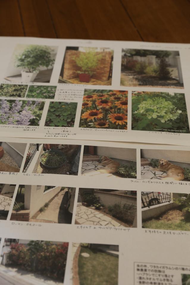 ハーブの苗と岸根公園_b0275998_2374550.jpg