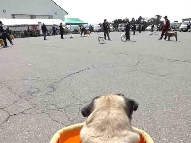 北海道犬展覧会へ_f0019498_17243469.jpg
