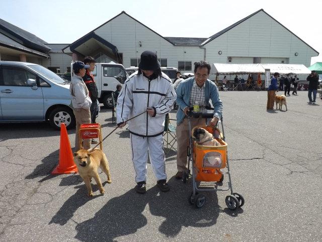 北海道犬展覧会へ_f0019498_17272236.jpg