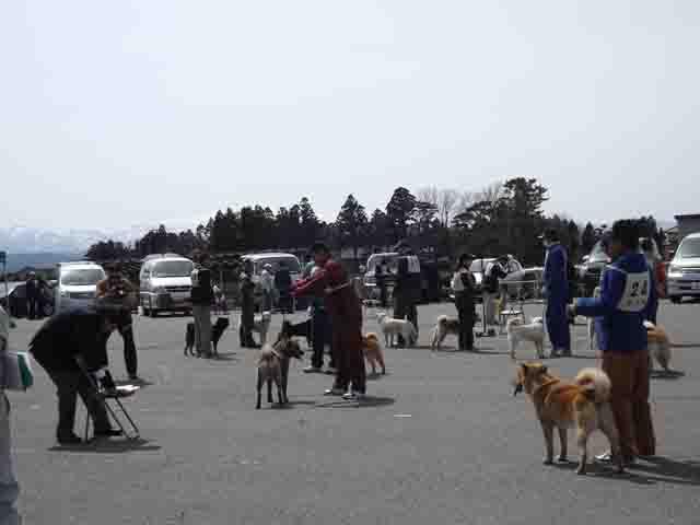 北海道犬展覧会へ_f0019498_1729105.jpg