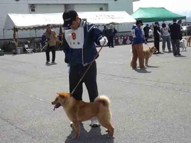 北海道犬展覧会へ_f0019498_17302859.jpg