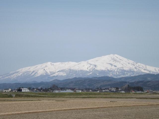 山形県庄内地方でお花見_f0019498_17444570.jpg