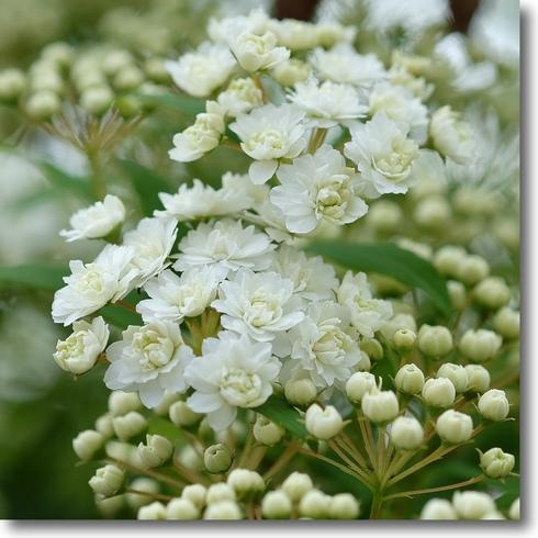 花の芽が次々と...。_f0099102_10481494.jpg
