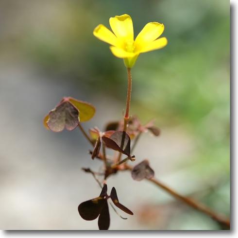 花の芽が次々と...。_f0099102_10485225.jpg
