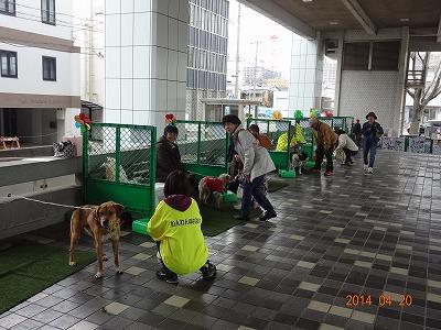 アメリカンクラシックカーが沼津に集結!!_d0050503_7221277.jpg