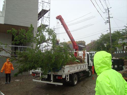 進む植栽計画_f0299108_22162361.jpg