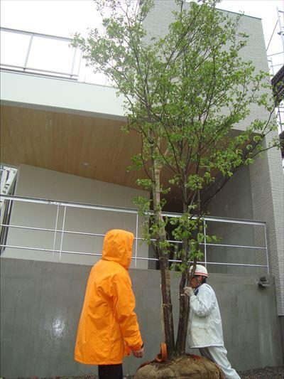 進む植栽計画_f0299108_22265273.jpg