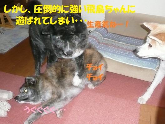 f0121712_1230385.jpg