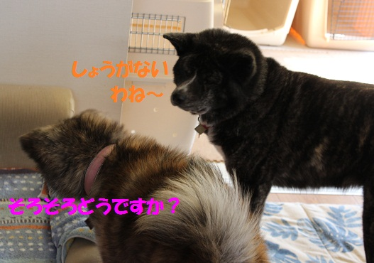f0121712_12574932.jpg