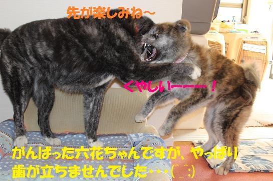 f0121712_12581032.jpg